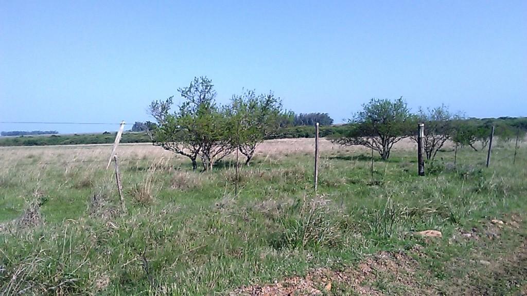 2. campo