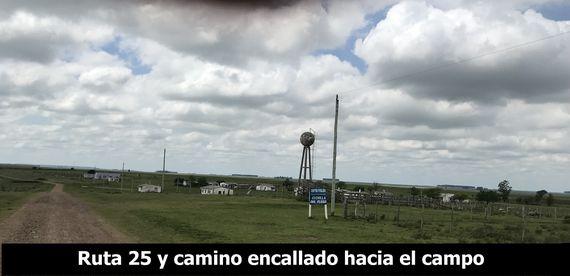 """Campo 378 hás. en """"Colonia Rubino"""""""
