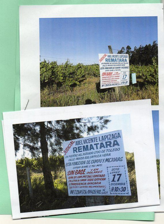 Buena Fracción de Campo de  9 hás 2.700 mts.  con mejoras en plantación de viñedos