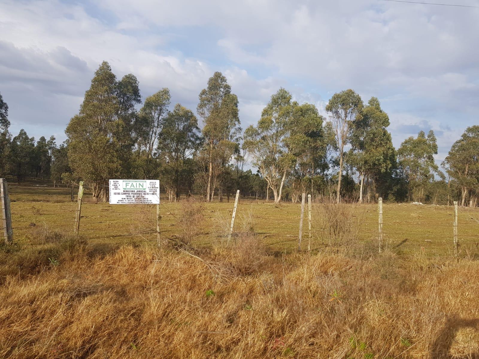 5.600 Hás en 15 lotes zona Cerro Chato