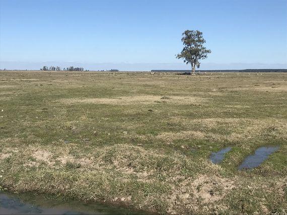Excelente campo agrícola de 645 hectáreas