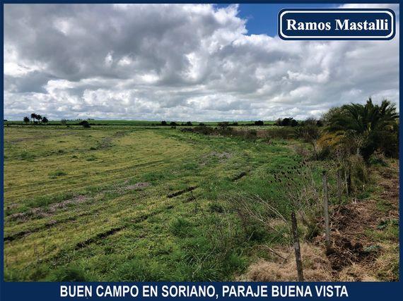 Buen campo en Soriano